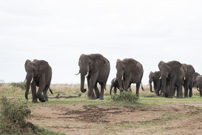 Tansania Nov. 2016